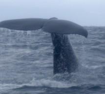 Nouvelle-Zélande, épisode 6 : Kaikoura, ou la faune à l'état sauvage !