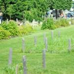 Jardin potager en pleine ville
