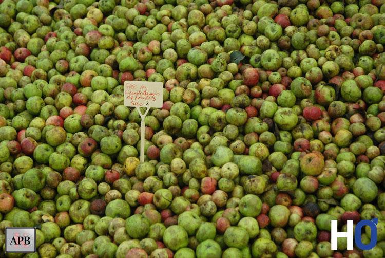 Une variété de pommes