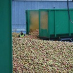 Arrivage de pommes