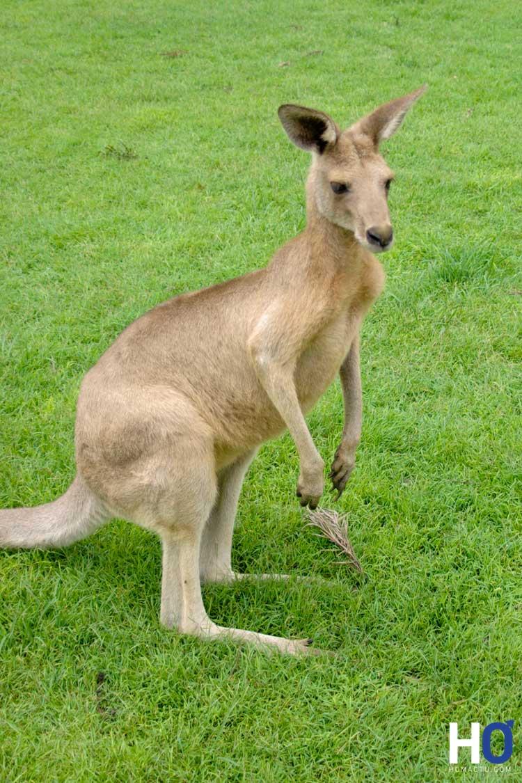 Australie_1