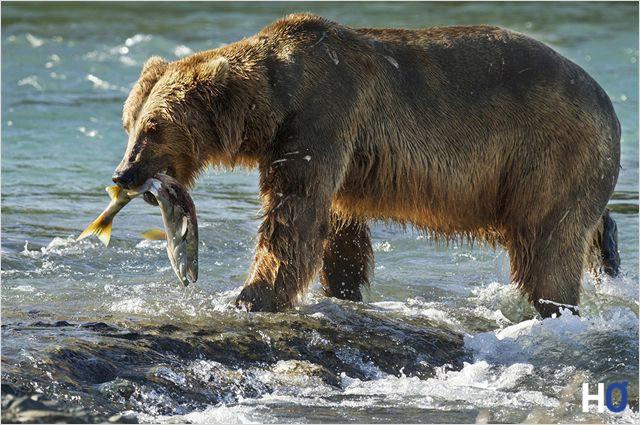 Sky a attrapé un saumon