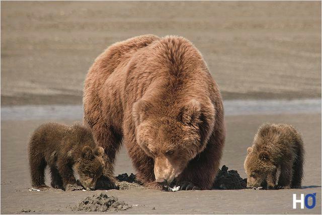 La mère Sky et ses deux oursons Amber et Scout