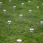 Jardin des Plantes Bertrand Planes  Bug's Life 2007-2014