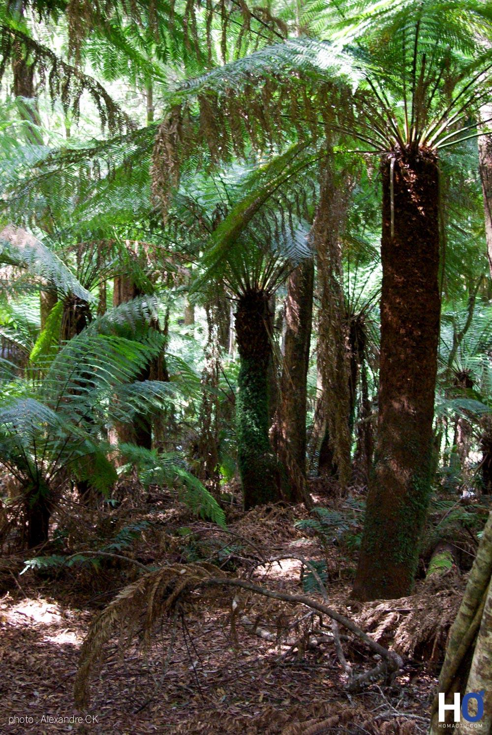 Tasmanie_fev_2016_0229