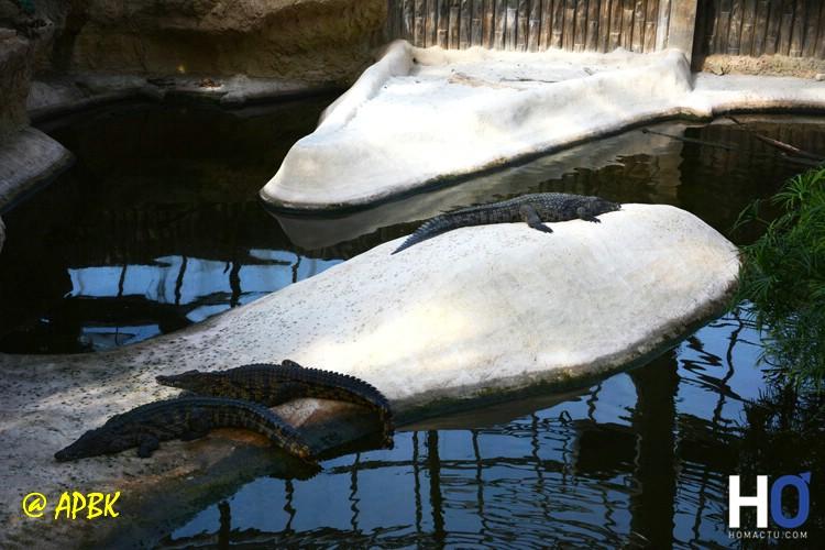 La planète des Crocodiles
