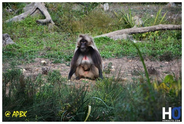 La vallée des singes
