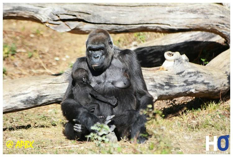 Mère nourrissant son petit