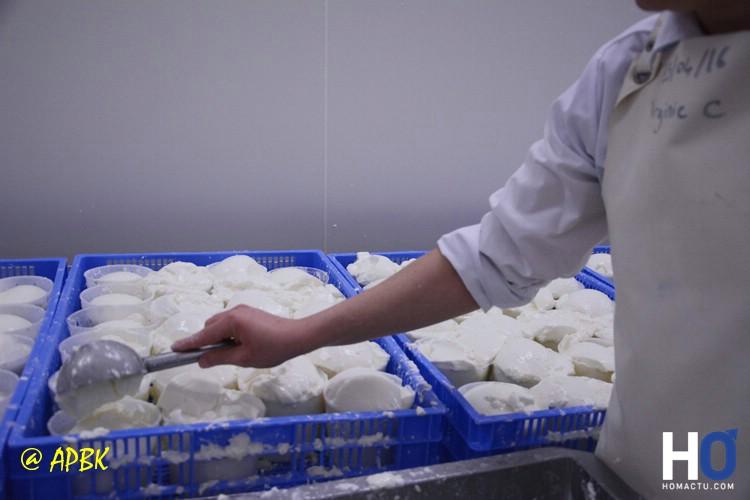 La mise du fromage blanc dans les faisselles