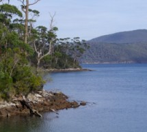 Carnet de voyage : Port Arthur et la peninsule de Tasmanie