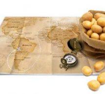 La pomme de terre…. un tubercule qui a la patate !