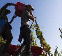 Les Bars à Vins Ecluse reçoivent  un vigneron tous les mois : Le Domaine GEORGES VERNAY est à l'honneur jusqu'au 17 avril.