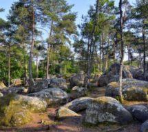 Calme et Bien être à Fontainebleau